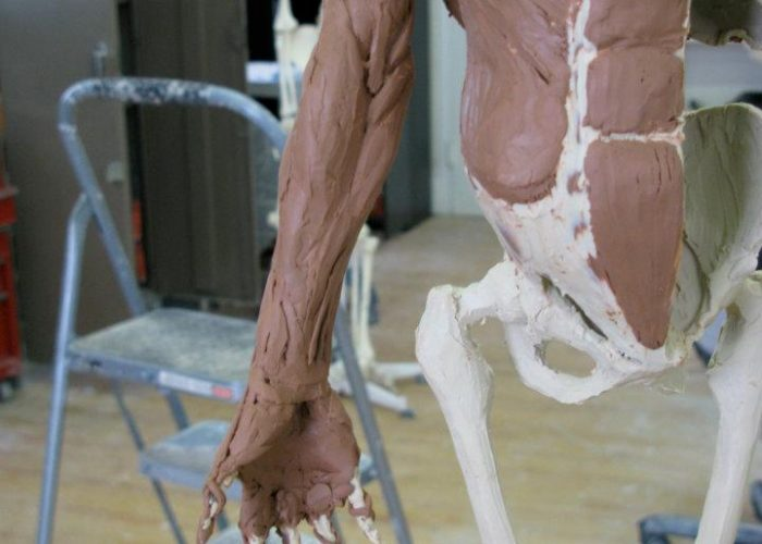 Anatomical Ecorchée Sculpture, Muscles of the Front